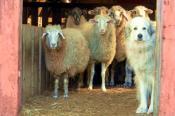 Sunnyside Wools